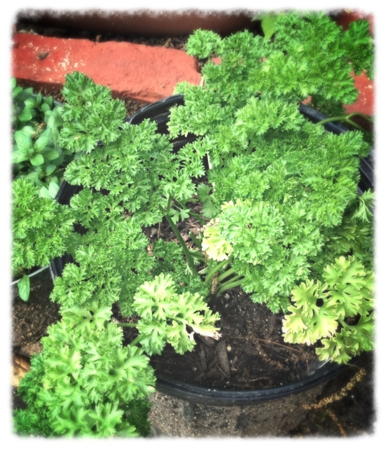 Parsley!