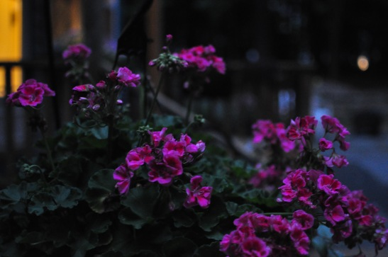 Evening (around 8 pm).
