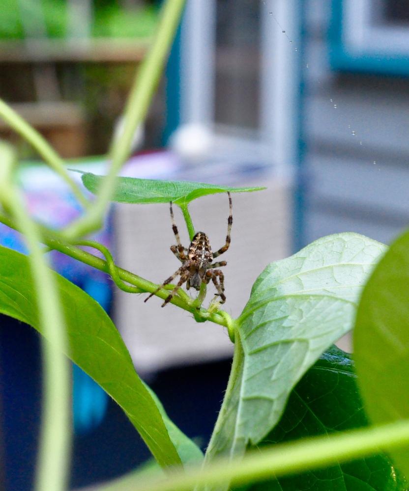 Spiderwebs (1/3)