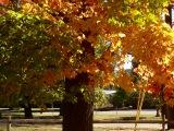 The Ordinary Tree