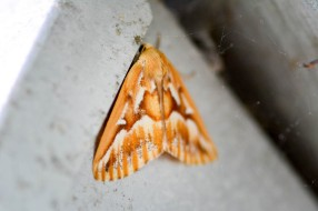 Cool moth near our front door.